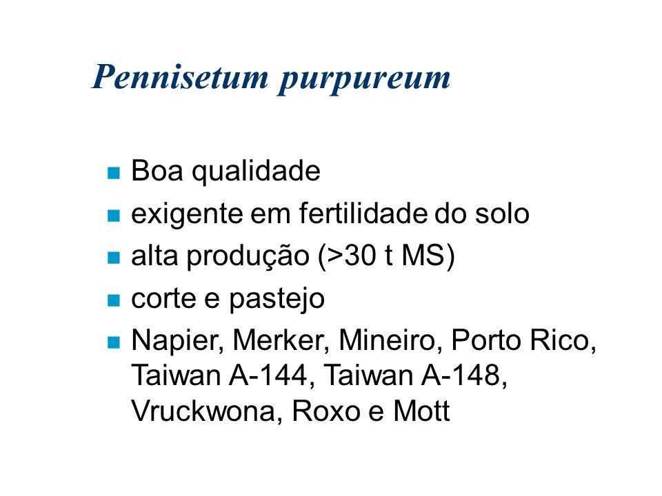 Pennisetum purpureum Boa qualidade exigente em fertilidade do solo
