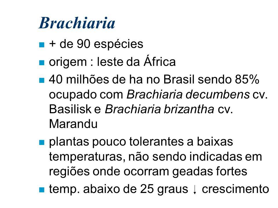 Brachiaria + de 90 espécies origem : leste da África