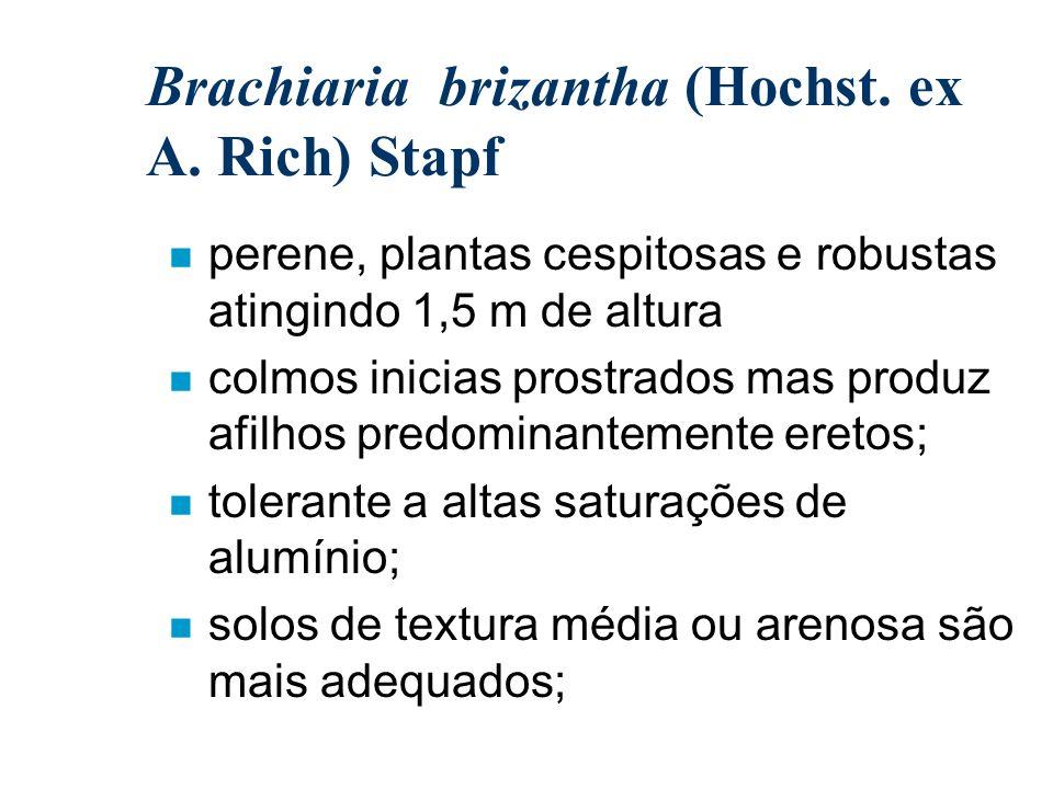 Brachiaria brizantha (Hochst. ex A. Rich) Stapf