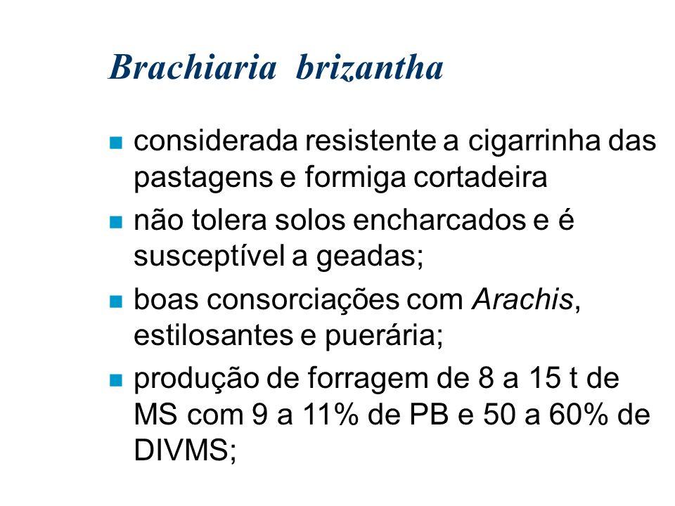 Brachiaria brizantha considerada resistente a cigarrinha das pastagens e formiga cortadeira. não tolera solos encharcados e é susceptível a geadas;
