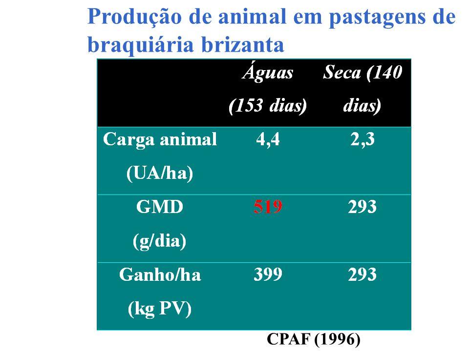 Produção de animal em pastagens de braquiária brizanta