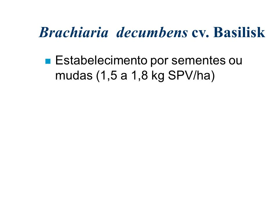 Brachiaria decumbens cv. Basilisk