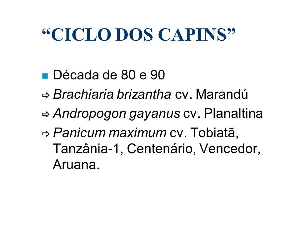 CICLO DOS CAPINS Década de 80 e 90 Brachiaria brizantha cv. Marandú
