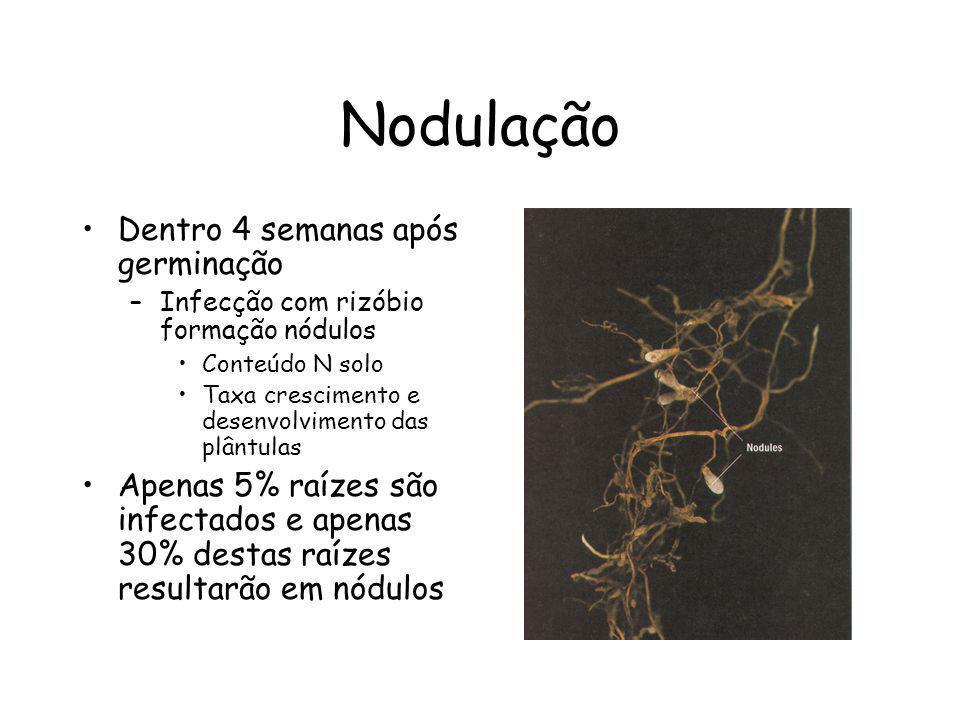 Nodulação Dentro 4 semanas após germinação