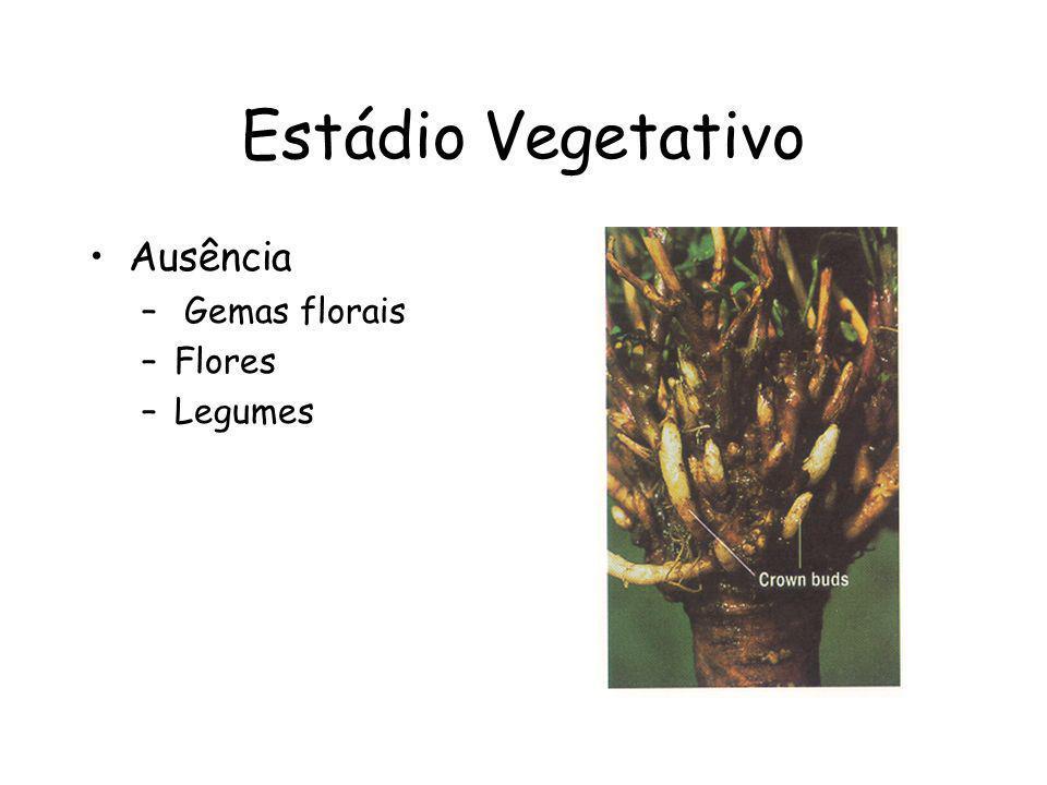 Estádio Vegetativo Ausência Gemas florais Flores Legumes