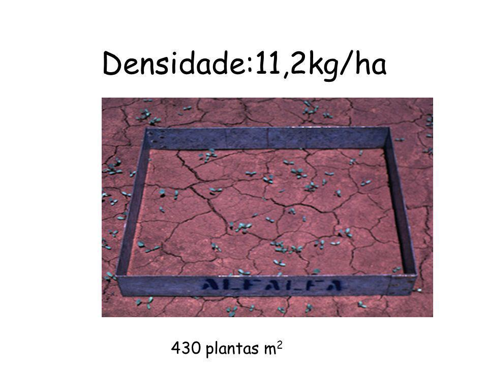 Densidade:11,2kg/ha 430 plantas m2