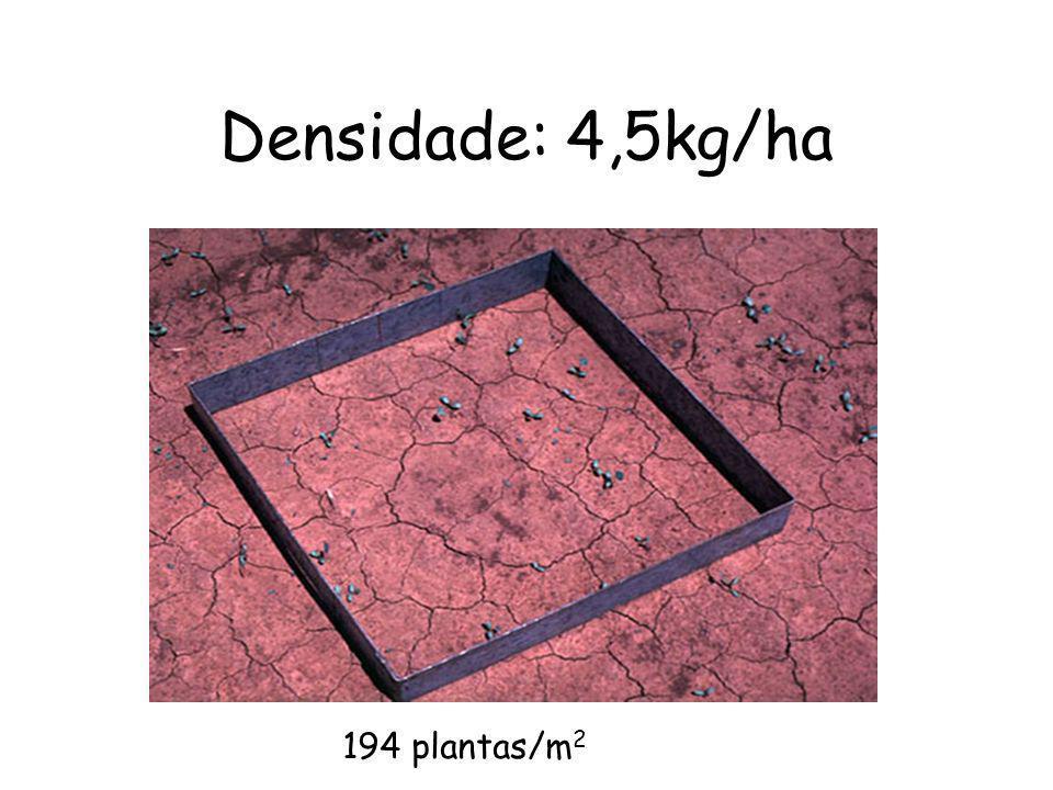 Densidade: 4,5kg/ha 194 plantas/m2