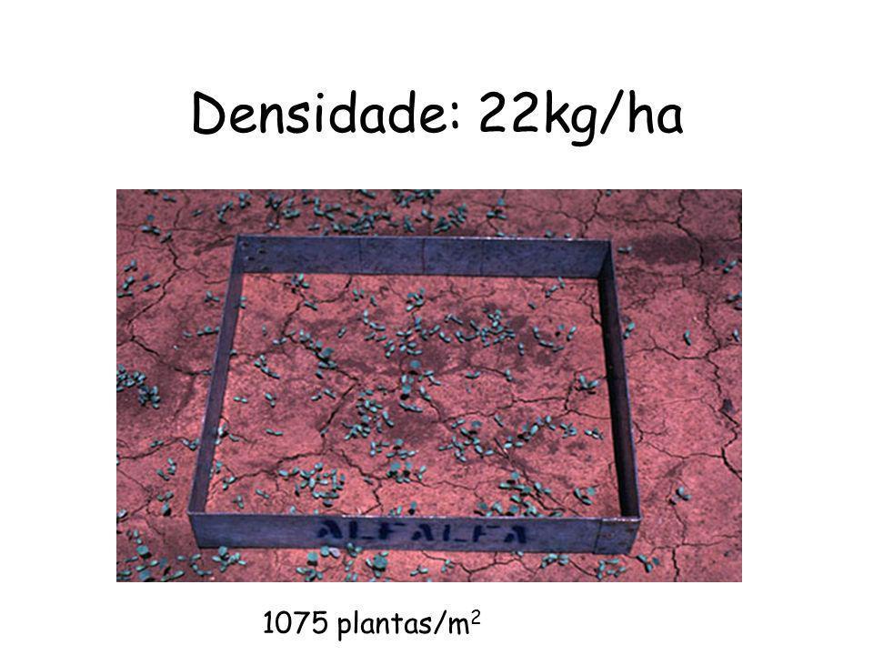 Densidade: 22kg/ha 1075 plantas/m2