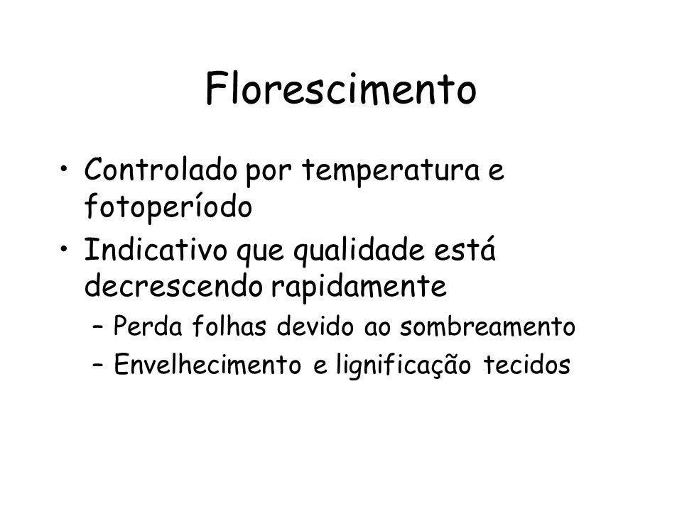 Florescimento Controlado por temperatura e fotoperíodo