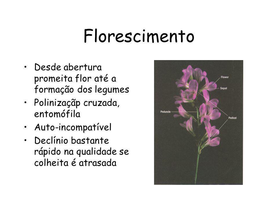 Florescimento Desde abertura promeita flor até a formação dos legumes
