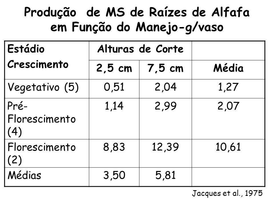 Produção de MS de Raízes de Alfafa em Função do Manejo-g/vaso