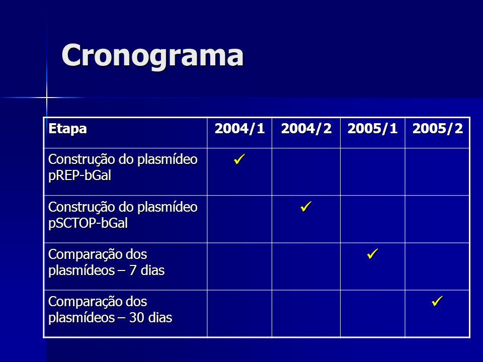 Cronograma  Etapa 2004/1 2004/2 2005/1 2005/2
