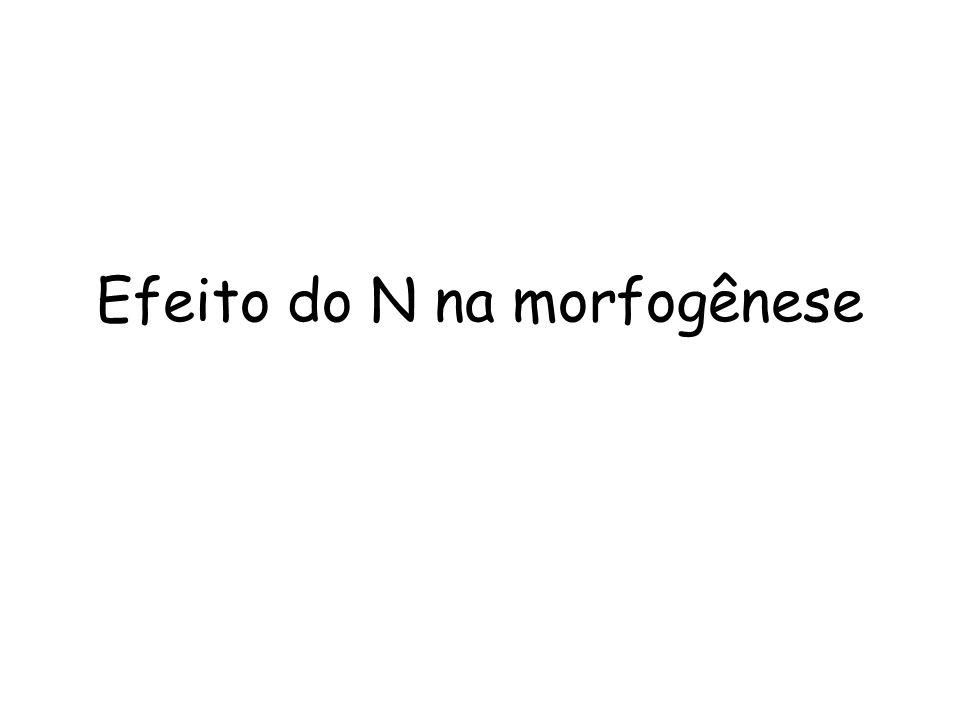 Efeito do N na morfogênese