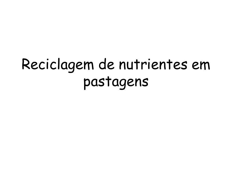 Reciclagem de nutrientes em pastagens
