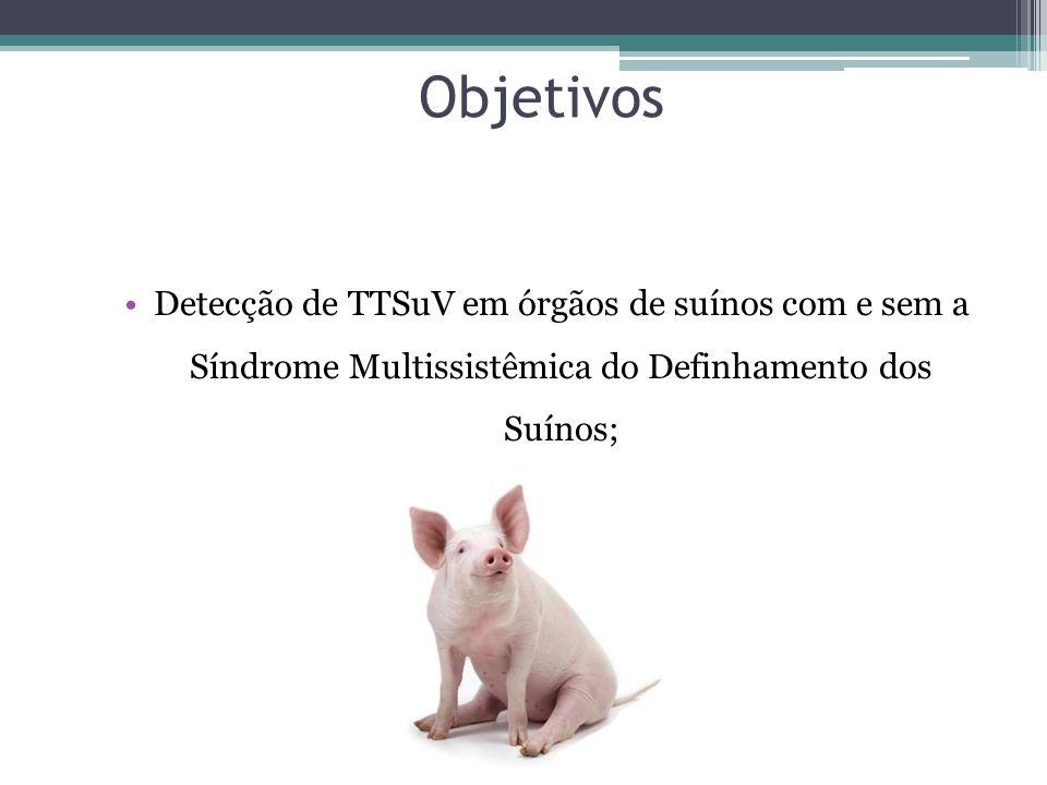 Objetivos Detecção de TTSuV em órgãos de suínos com e sem a Síndrome Multissistêmica do Definhamento dos Suínos;