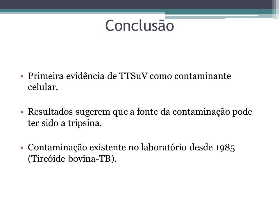 Conclusão Primeira evidência de TTSuV como contaminante celular.