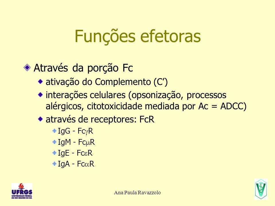 Funções efetoras Através da porção Fc ativação do Complemento (C')