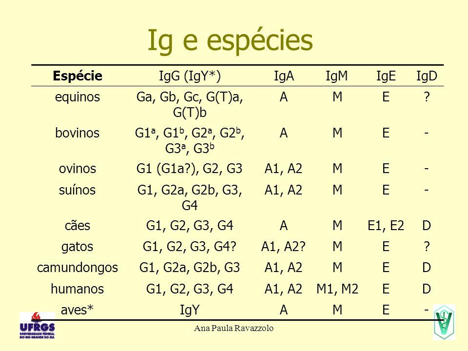 Ig e espécies Espécie IgG (IgY*) IgA IgM IgE IgD equinos