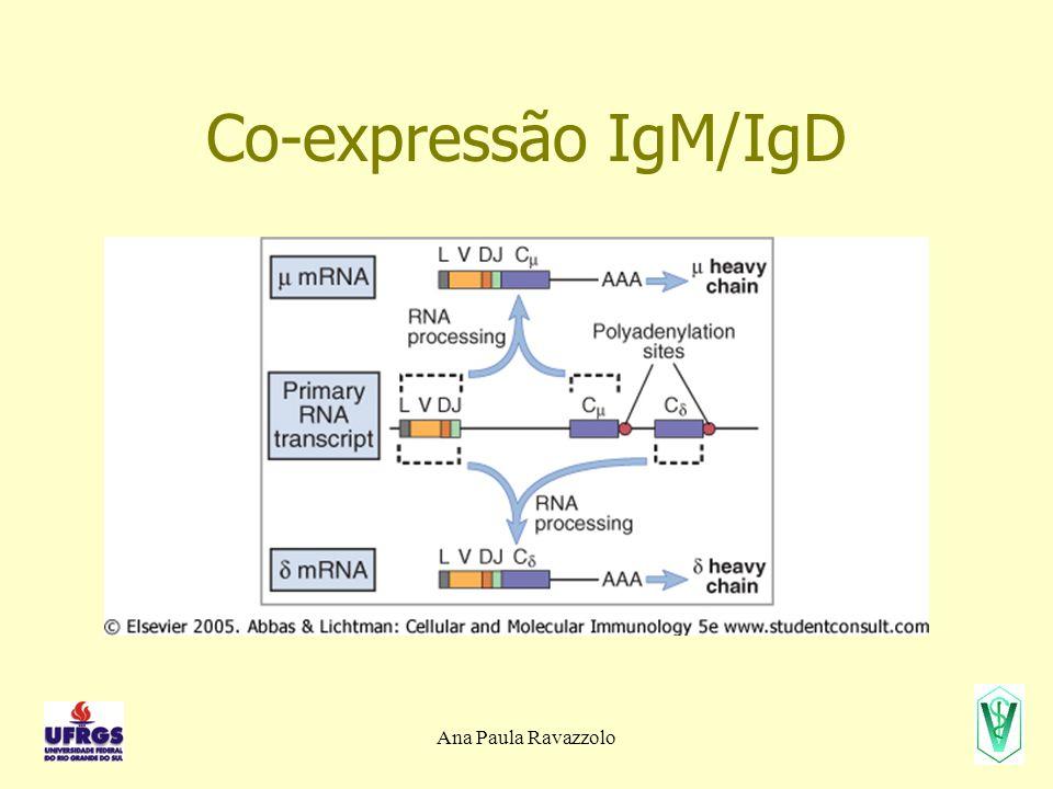 Co-expressão IgM/IgD Ana Paula Ravazzolo