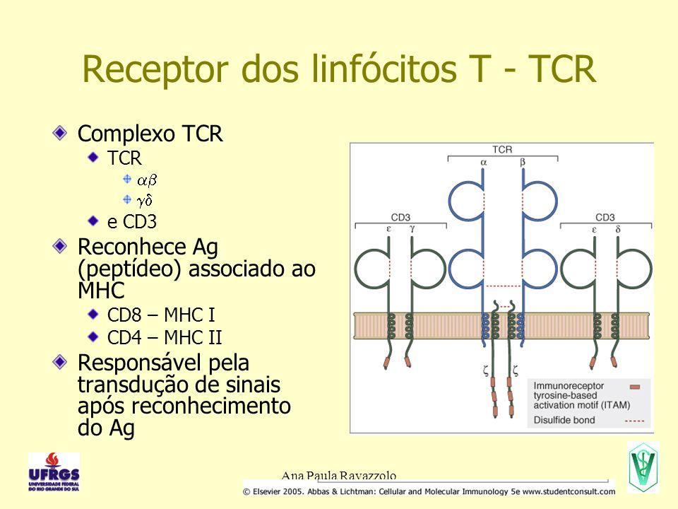 Receptor dos linfócitos T - TCR