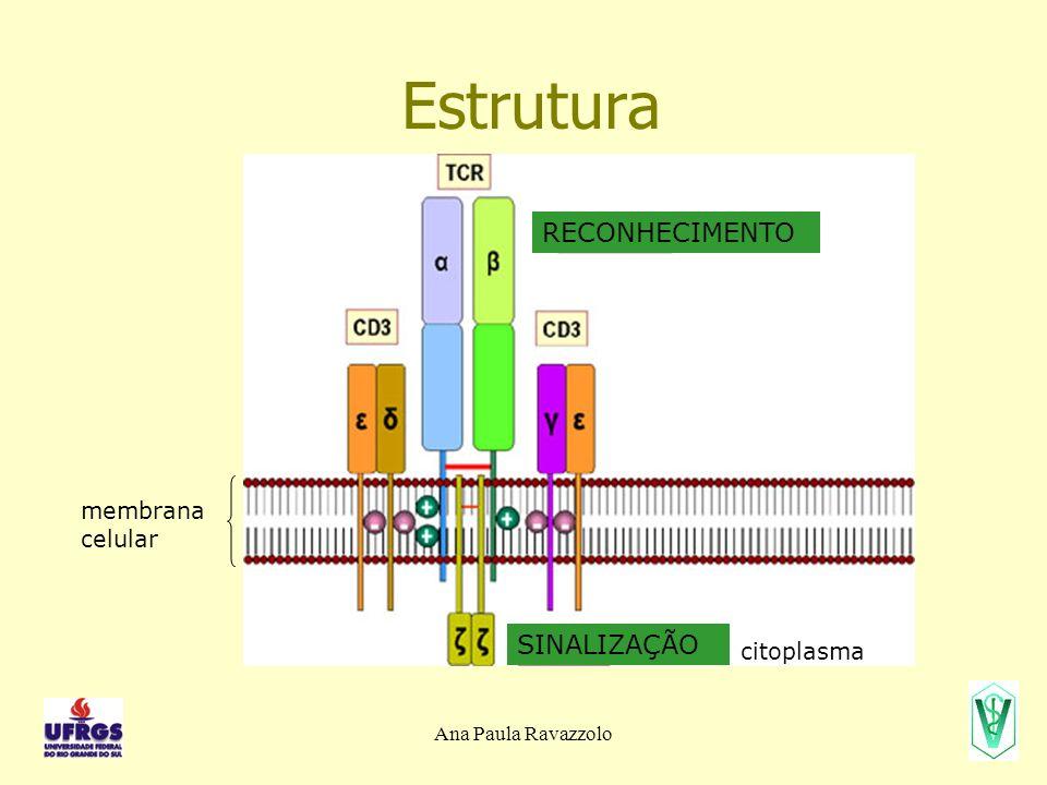 Estrutura RECONHECIMENTO SINALIZAÇÃO membrana celular citoplasma