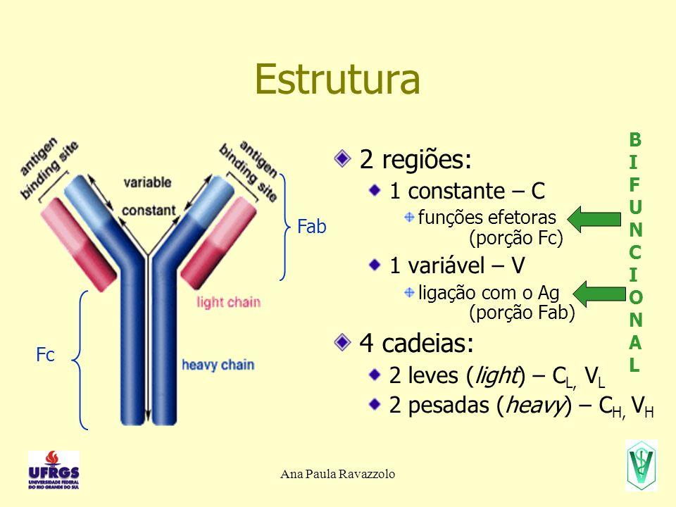 Estrutura 2 regiões: 4 cadeias: 1 constante – C 1 variável – V