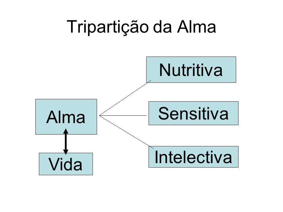 Tripartição da Alma Nutritiva Alma Sensitiva Intelectiva Vida