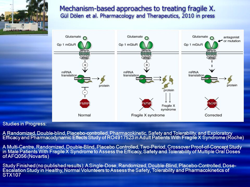 Mechanism-based approaches to treating fragile X. Gül Dölen et al