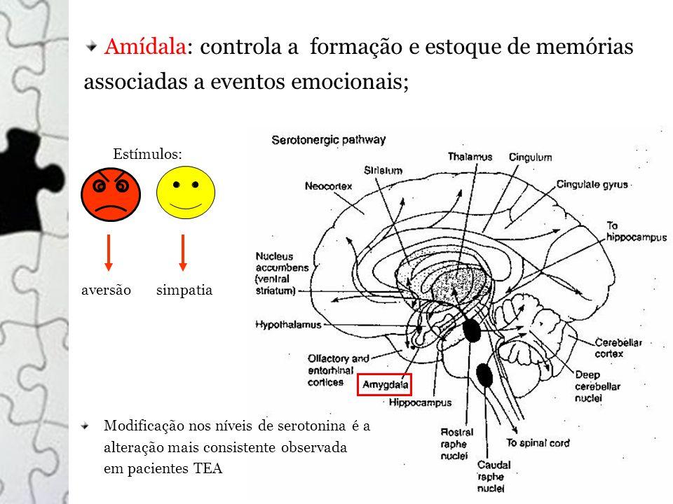 Amídala: controla a formação e estoque de memórias associadas a eventos emocionais;