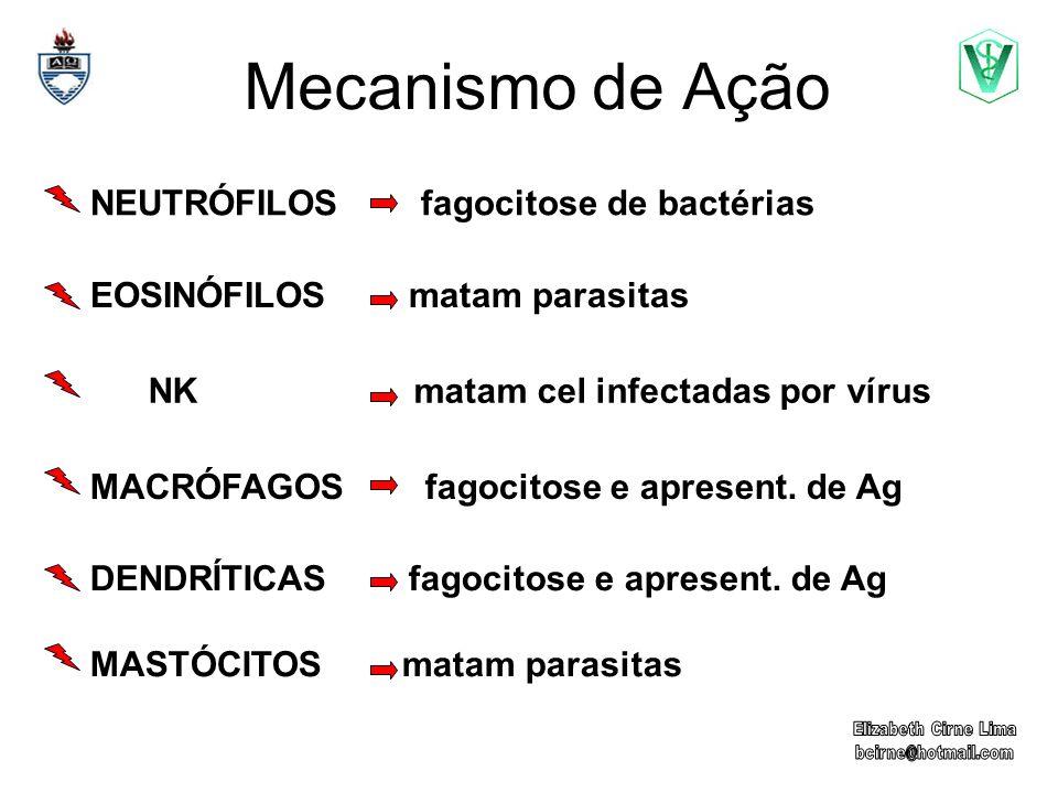 NEUTRÓFILOS fagocitose de bactérias