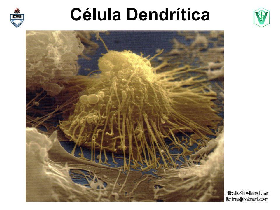 Célula Dendrítica Elizabeth Cirne Lima bcirne@hotmail.com