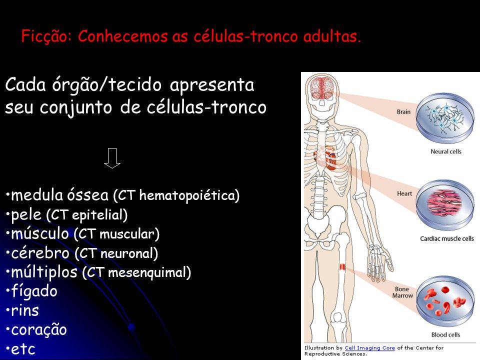 Cada órgão/tecido apresenta seu conjunto de células-tronco