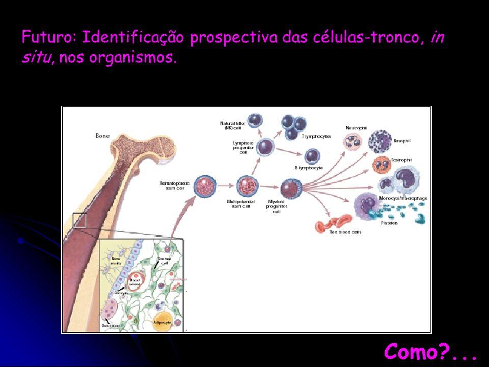 Futuro: Identificação prospectiva das células-tronco, in situ, nos organismos.