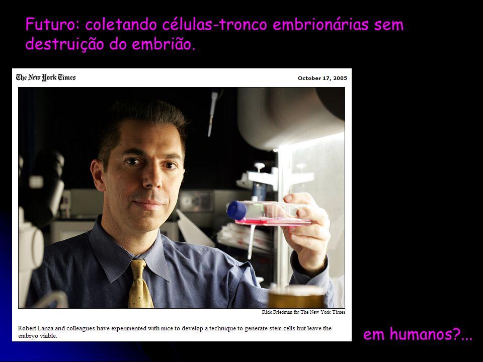 Futuro: coletando células-tronco embrionárias sem destruição do embrião.