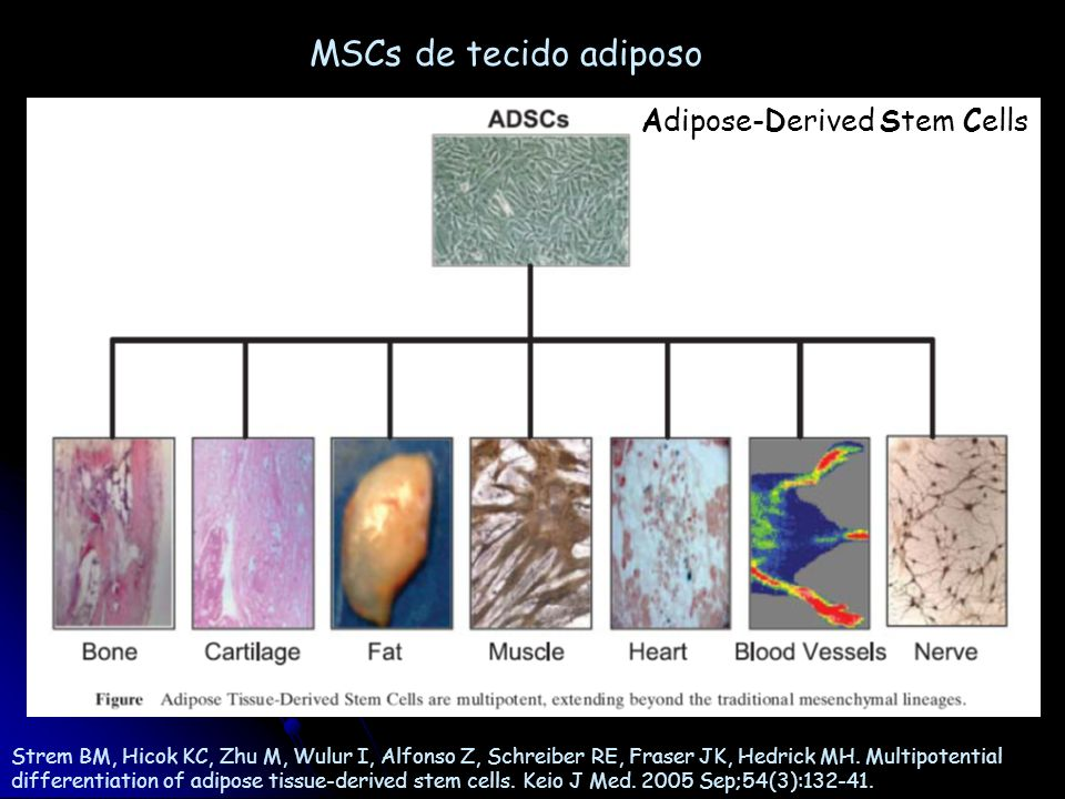 MSCs de tecido adiposo Adipose-Derived Stem Cells
