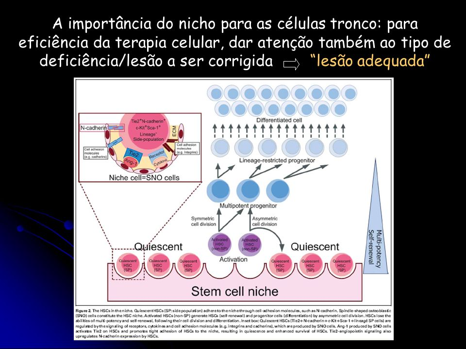 A importância do nicho para as células tronco: para eficiência da terapia celular, dar atenção também ao tipo de deficiência/lesão a ser corrigida lesão adequada