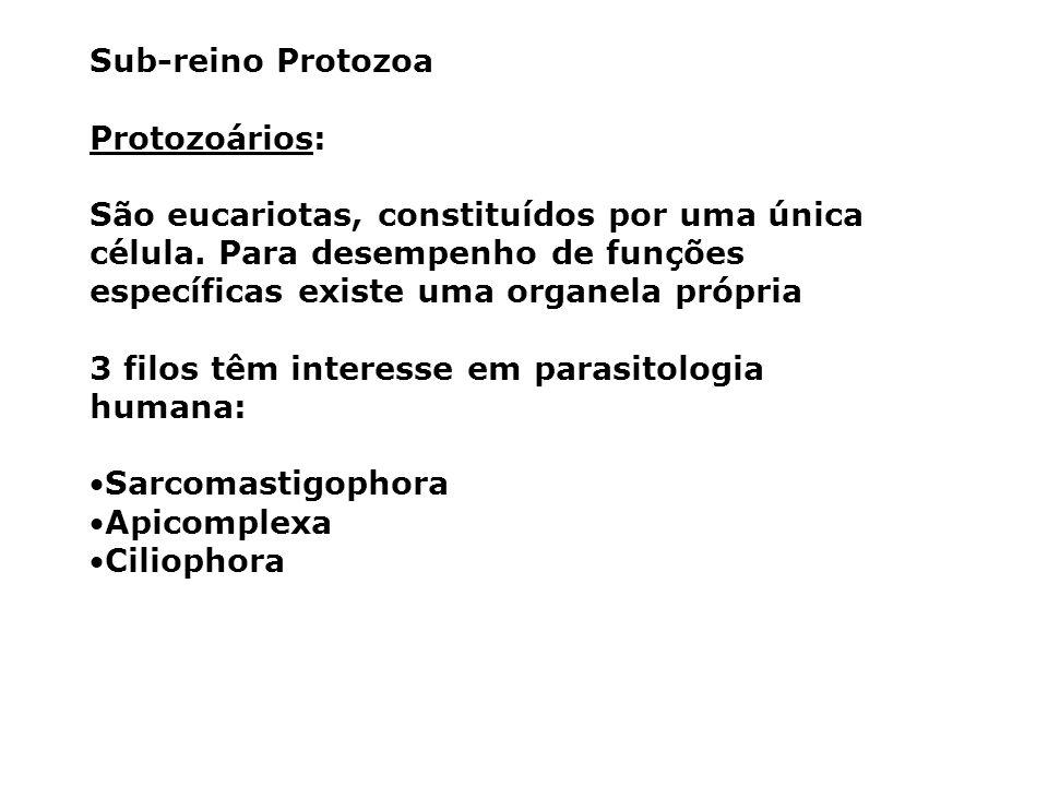 Sub-reino Protozoa Protozoários: