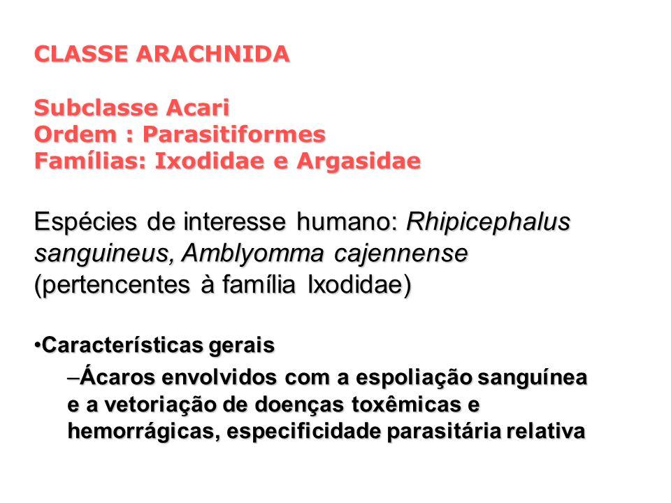 CLASSE ARACHNIDA Subclasse Acari. Ordem : Parasitiformes. Famílias: Ixodidae e Argasidae.