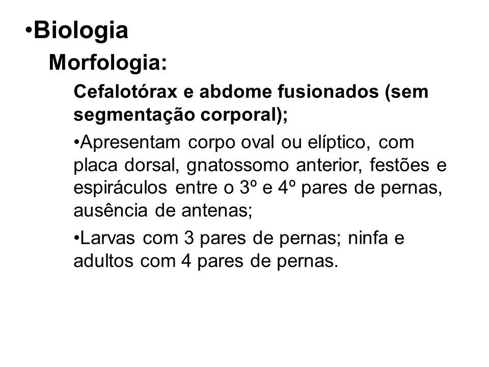 Biologia Morfologia: Cefalotórax e abdome fusionados (sem segmentação corporal);