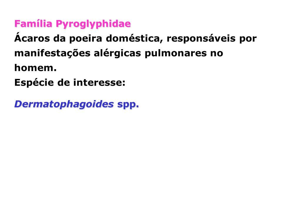 Família Pyroglyphidae