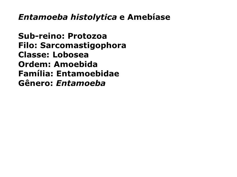 Entamoeba histolytica e Amebíase