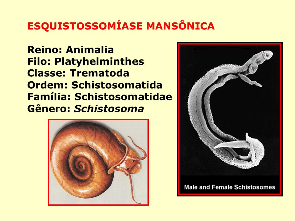ESQUISTOSSOMÍASE MANSÔNICA