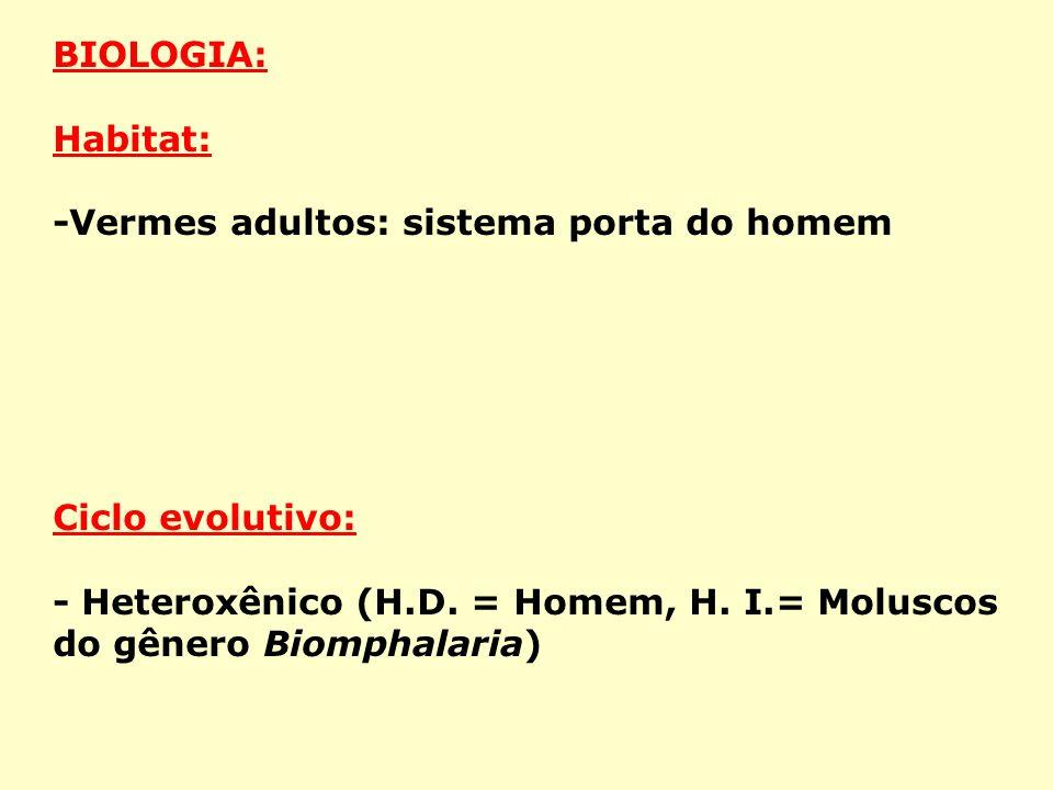 BIOLOGIA: Habitat: -Vermes adultos: sistema porta do homem.