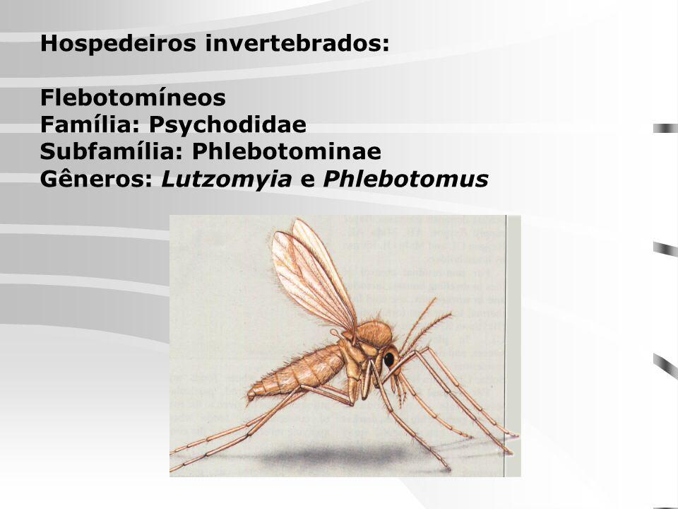Hospedeiros invertebrados:
