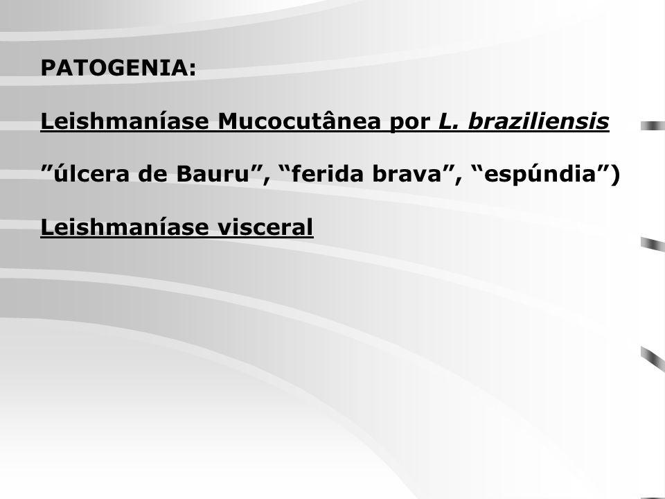 PATOGENIA: Leishmaníase Mucocutânea por L. braziliensis. úlcera de Bauru , ferida brava , espúndia )