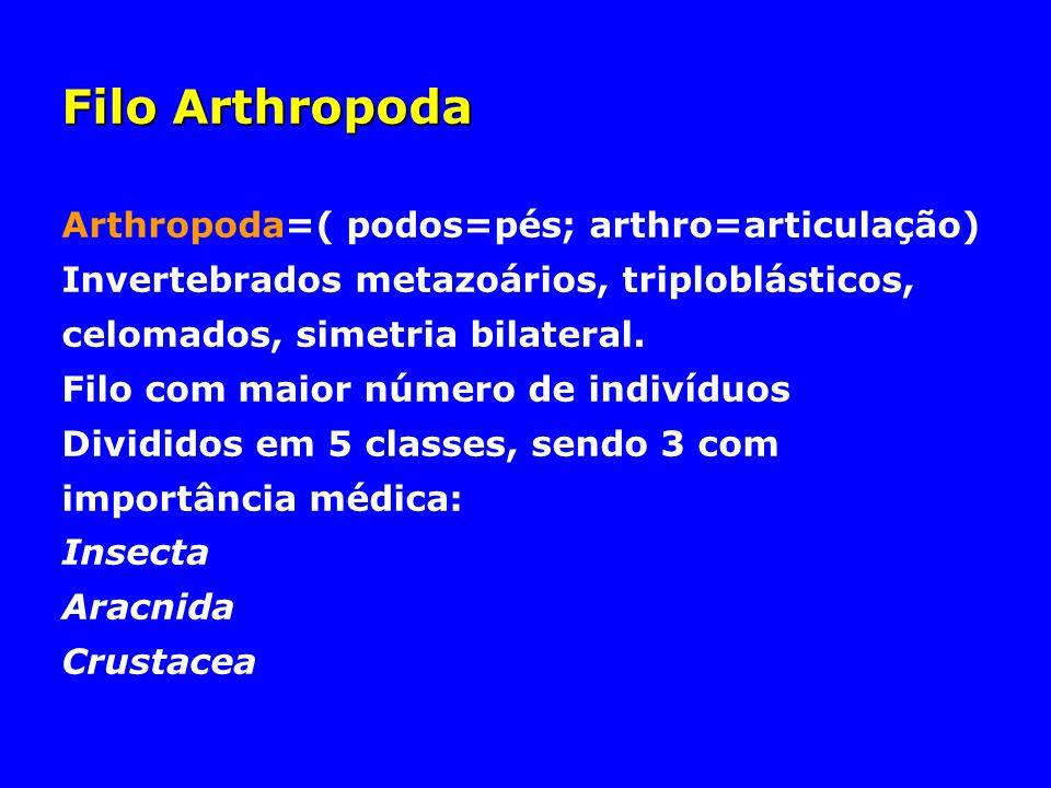 Filo Arthropoda Arthropoda=( podos=pés; arthro=articulação)