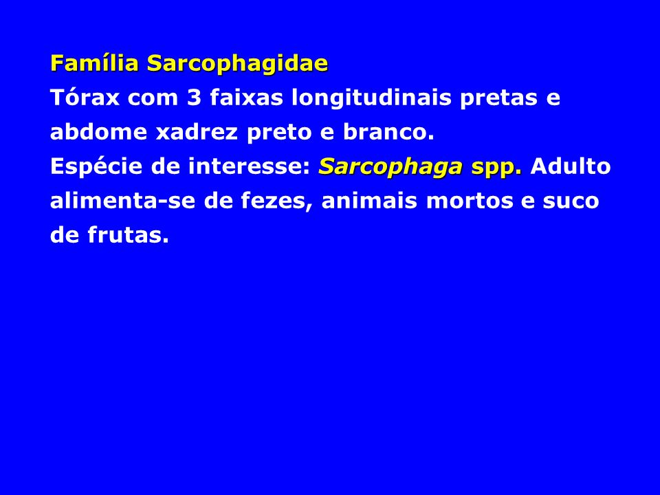 Família Sarcophagidae