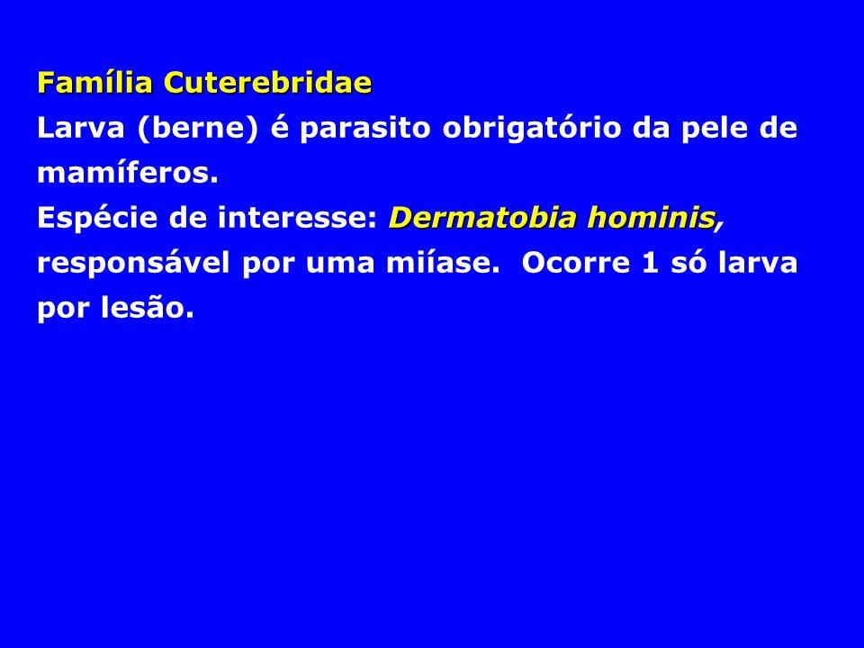 Família CuterebridaeLarva (berne) é parasito obrigatório da pele de mamíferos.
