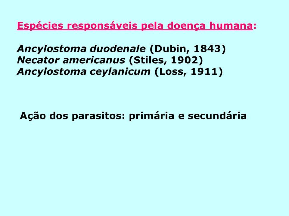 Espécies responsáveis pela doença humana: