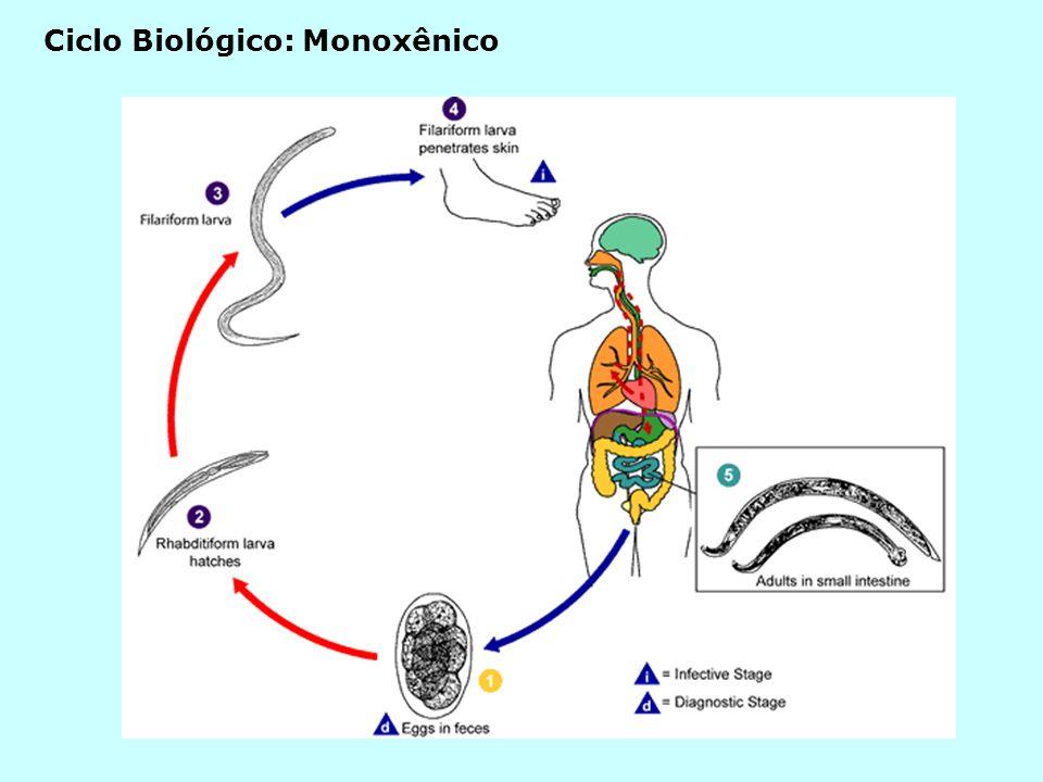 Ciclo Biológico: Monoxênico